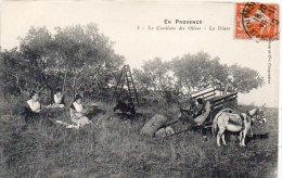 En Provence - La Cueillette Des Olives (L' Olivado).Le Diner    (85015) - France