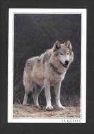 ANIMAL - ANIMAUX - VALLÉE DU GATINEAU LOUP GRIS - GREY WOLF - GRAND FORMAT 16½ X 11.2cm  6¾ X 4½ - PHOTO VALAN - Animaux & Faune