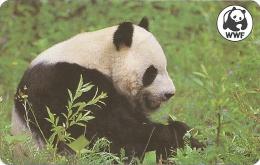 Malawi - MTN - Giant Panda Bear Animal 5 (Fake ) - 100Units - Malawi