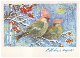 """WAXWING BIRDS, RED ASHBERRY. """"HAPPY NEW YEAR!"""" (USSR, 1975 Unused Postal Stationery Card) - Vogels"""