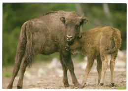CPM   48  SAINTE EULALIE EN MARGERIDE       RESERVE DE BISONS    JEUNES BISONS - Animals