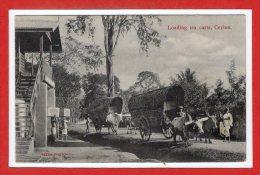 ASIE --  SRI LANKA - ( CEYLON )  - Loading Tea Carts - Sri Lanka (Ceylon)