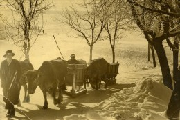 France Alpes Villard De Lans Boeufs De Retour Du Marche Neige Ancienne Photo 1935 - Beroepen