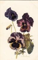 Pensées à Grandes Fleurs - Bartrim - Fleurs