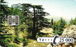 LEBANON  25.000  L CEDAR TREE  LANDSCAPE CHIP  READ DESCRIPTION !!