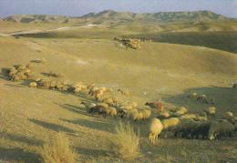 Israel--Judean Desert Landscape - Israel
