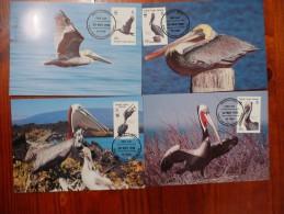 WWF British Virgin Islands Britisch Jungfern Inseln  Brown Pelican Braune Pelikan 1988 CM MC Carte Maximum MAximumkarte - Maximum Cards