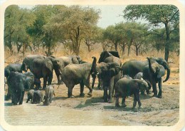 Elephant. Cameroun Réserve Waza  AL 345 - Éléphants