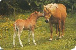 HORSES / PFERDE / CHEVAUX /    POSTCARD USED     ( H  4087 ) - Pferde