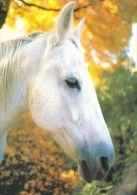 HORSES / PFERDE / CHEVAUX /    POSTCARD UNUSED     ( H  4107 ) - Pferde