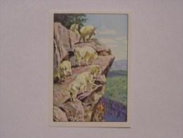 PANINI WEST   1976    Original Figurine N° 35     Vignette Autocollante Pink Back Dos Rose Très Bon Etat Stickers - Franse Uitgave