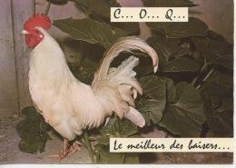 C... O... Q... Le Meilleur Des Baisers... (n°221 Ed Artaud) Oiseaux Coq Blanc (animaux Humoristiques) - Humour