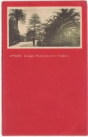 C104 - LA SPEZIA - SPEZIA - GRUPPO PALME GIARDINI PUBBLICI 1921 - La Spezia