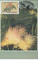 PERSIAN SILK TREE, CM, MAXICARD, CARTES MAXIMUM, 1996, ROMANIA - Bäume