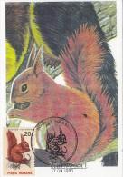 SQUIRREL, CM, MAXICARD, CARTES MAXIMUM, 1993, ROMANIA - Rodents