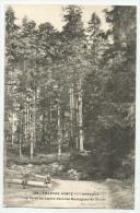 CPA DOUBS  - 25 - Une Forêt De Sapin Dans Les Montagnes Du Doubs - Francia