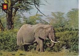 POSTAL DE UN ELEFANTE AFRICANO (ELEPHANT) (ESCUDO DE ORO) - Elefantes