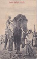 POSTAL DE TUSKER ELEPHANT EN COLOMBO (CEILAN) (ELEFANTE) (PRINTED IN SAXONY) - Sri Lanka (Ceilán)