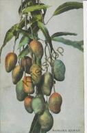 Hawaii - Mangoes (2A084 - Ohne Zuordnung