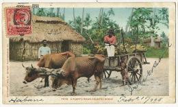 Puerto Rico A Puerto Rican Country Scene Ox Cart Used 1908 Maximum Card - Puerto Rico