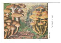 CPSM CHAMPIGNONS D EUROPE ARMILLAIRE HYPHOLOME  PAR ROGER HEIM PUB TYZINE - Mushrooms