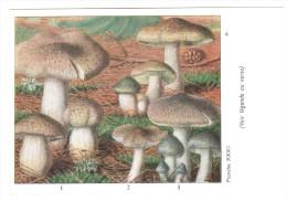 CPSM CHAMPIGNONS D EUROPE TRICHOLOME DIVERS  PAR ROGER HEIM PUB TYZINE - Mushrooms