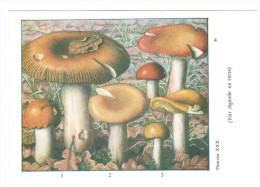 CPSM CHAMPIGNONS D EUROPE RUSSULE DIVERS  PAR ROGER HEIM PUB TYZINE - Mushrooms