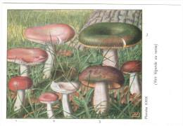 CPSM CHAMPIGNONS D EUROPE RUSSULE AUTRES  PAR ROGER HEIM PUB TYZINE - Mushrooms