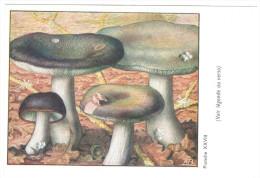 CPSM CHAMPIGNONS D EUROPE RUSSULE CHARBONNIER  PAR ROGER HEIM PUB POLYMYIXINE - Mushrooms