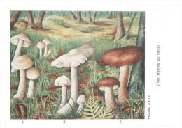 CPSM CHAMPIGNONS D EUROPE TRICHOLOME COLOMBETTE  PAR ROGER HEIM PUB POLYMYXINE - Mushrooms