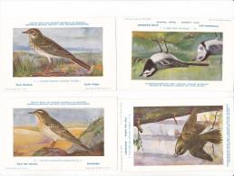 25603 Lot 4 CP Institut Sciences Naturelles Belgique -série Oiseaux - Pipit 2 Champs 1 Richard  3 Arbres - 8 Hochequeue - Oiseaux