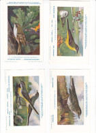 25604 Lot 4 CP Institut Sciences Naturelles Belgique -série Oiseaux -7 Hochequeue, 6 Jaune-5 Pipit  9 Grimpereau - Oiseaux