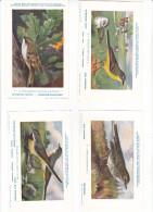 25604 Lot 4 CP Institut Sciences Naturelles Belgique -série Oiseaux -7 Hochequeue, 6 Jaune-5 Pipit  9 Grimpereau