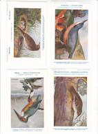 25605 Lot 4 CP Institut Sciences Naturelles Belgique -série Oiseaux -196 Martin Pecheur 10 Grimpereau 11 Sitelle 4 Pipit - Oiseaux