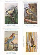 25606 Lot 4 CP Institut Sciences Naturelles Belgique -série Oiseaux -13 Mesange 12 Charbonniere 194 Guepier 172 Alouette - Oiseaux