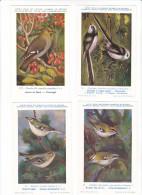 25607 Lot 4 CP Institut Sciences Naturelles Belgique -série Oiseaux -177 Jaseur -20 Roitelet -19 Huppé -18 Mesange - Oiseaux