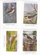25608 Lot 4 CP Institut Sciences Naturelles Belgique -série Oiseaux -15 Mesange , 17 Saules, 16 Moinette -171 Alouette -