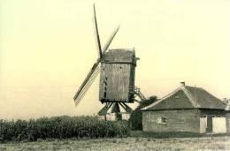 SINT-KATHERINA-LOMBEEK Bij Ternat (Vlaams-Brabant) - Molen/moulin - Molen De Neef, Enkele Jaren Voor De Afbraak - Ternat