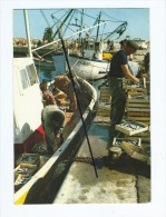 CPM -  Scène De Pêche En Méditerranée - Le Déchargement Des Sardines Au Retour De La Pêche - Bateaux - Pêcheurs - Pêche
