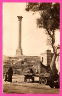 Carte Photo - Colonne Pompée à Alexandrie - Animée Avec Marchands - 1903 - Cachet Alexandrie - Alejandría