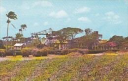 Barbados Typical Sugar Factory - Barbados