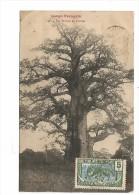 COF.0006/ Un Baobab En Février - French Congo - Other