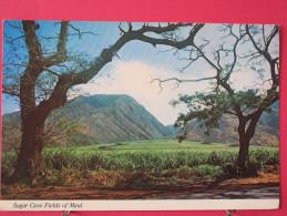 Carte Pas Très Courante - Etats Unis - Hawaï - Sugar Cane Fields Of Maui - Joli Timbre - Scans Recto-verso - Maui