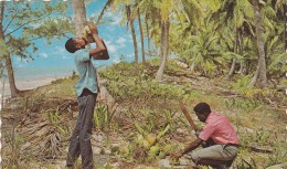 THE TROPICAL CARIBBEAN    / REF  MARS 16 / N° 205 - Antilles