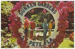 MACAW PARROTS At Sunken Gardens - St. Petersburg, FLORIDA (Unused Postcard - USA, 1984) - Birds