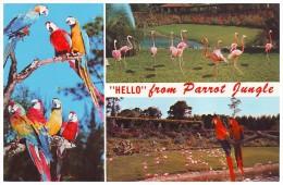 """HELLO"" FROM PARROT JUNGLE - MIAMI, FLORIDA (Unused Postcard - USA) - Birds"
