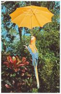 PARROTS. MACAW WITH UMBRELLA At Parrot Jungle - MIAMI, FLORIDA (Unused Postcard - USA) - Birds