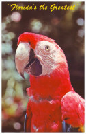 MACAW PARROT. One Of The Colorful Inhabitants Of Parrot Jungle - MIAMI, FLORIDA (Unused Postcard - USA) - Birds