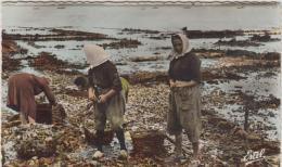 ILE DE RE FEMMES EN PANTALONS TRAVAILLANT DANS LES PARCS A HUITRES CPSM 9X14 1959 TBE - Ile De Ré