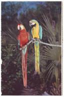MACAWS - Philadelphia Zoological Garden - Philadelphia, Pennsylvania (Unused Postcard - USA) - Birds